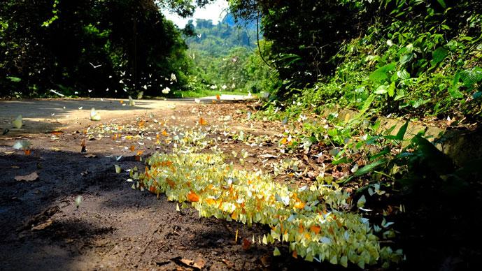 Papillons dans le parc de Cuc Phuong, Ninh Binh