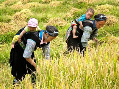 Paysages tonkinois du Vietnam en 10 Jours